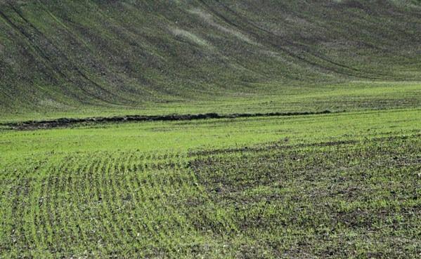 Peste 80 la sută din terenurile preconizate pentru culturile de toamnă au fost însămînțate