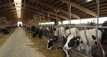 Un investitor străin vrea să deschidă în Moldova o fabrică de prelucrare a deşeurilor animale