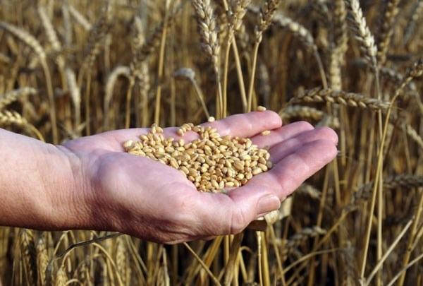 Preţul cerealelor a ajuns la cel mai ridicat nivel din ultimii şase ani