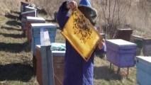 Revizia de primăvară a familiilor de albine