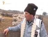 Ciobănaş cu 400 de oi şi 300 de capre…