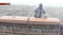 Cultivarea chimenului pentru prima dată într-o gospodărie din raionul Drochia