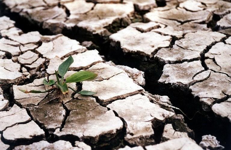 Seceta face ravagii în Belorus