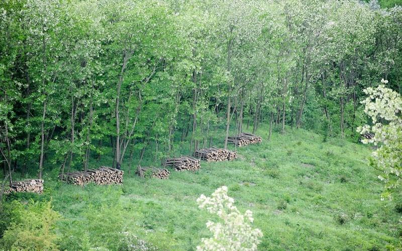 FOTO. Pădurea din Boghenii Noi administrată după model european