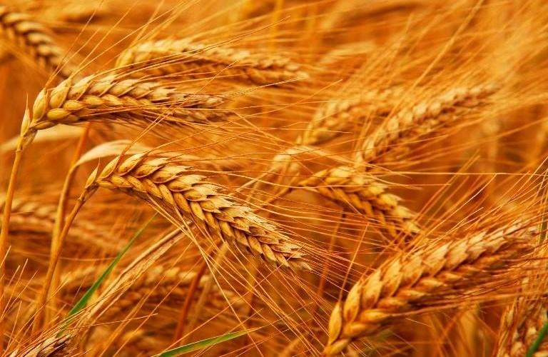 Ucraina vrea să menţină exportul de cereale la un nivel ridicat şi în 2015-2016