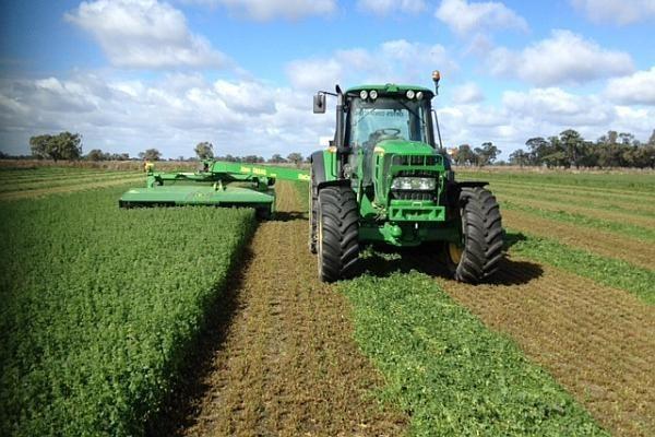 Tehnologia de cultivare a lucernei, planta furajeră care asigură un profit de 1.000 euro/ha