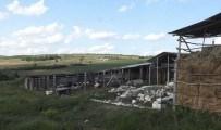 Brânza moldovenească de la Șoldănești își face cale spre Italia