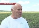 VIDEO. Fermierul din Carabetovca care cultivă harbuji ecologici pe ogoarele sale