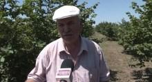 VIDEO. Și-a ridicat o livadă de aluni de toată frumusețea pe banii europenilor