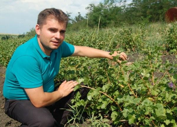 A investit într-o plantație de fructe de pădure și vrea să demonstreze că e o afacere bună