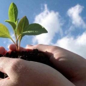 Unul din cei mai mari importatori de produse fitosanitare și fertilizanți declarat insolvabil