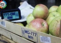 VIDEO. Investigație cu camera ascunsă: Embargo moldovenesc la exportul de fructe în Rusia