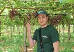 Sergiu Caldari: Poate pare imposibil, însă viticultorii italieni reușesc să controleze coacerea strugurilor