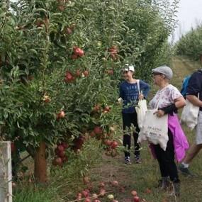 FOTO. Turiști străini la cules mere într-o livadă din nordul Moldovei