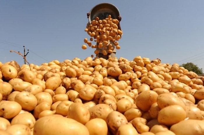 La Corjeuți ar putea fi deschisă o fabrică de prelucrare a cartofilor, cu sprijinul Letoniei