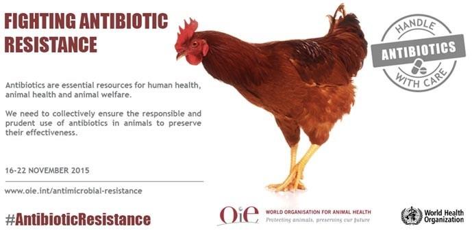 ANSA atenționează asupra riscurilor utilizării necontrolate a antibioticelor la animale