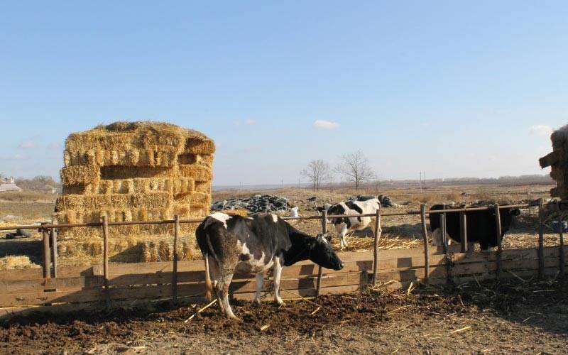 FOTO. În vizită la mini-ferma de vaci a familiei Cazac din Onițcani, Criuleni