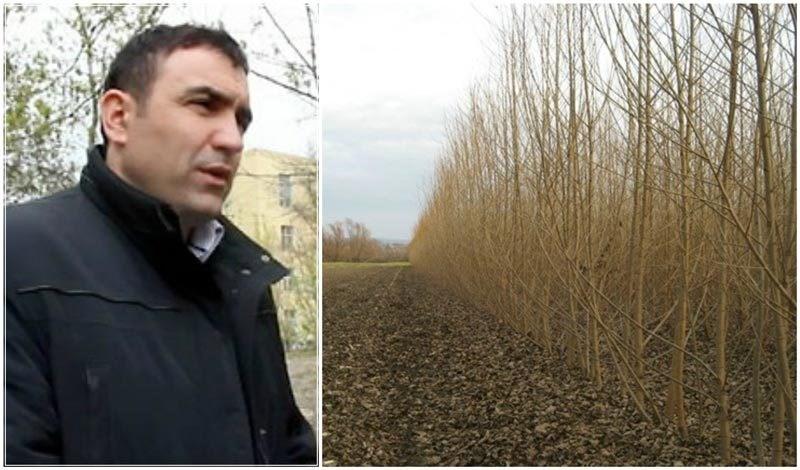 Ce planuri de viitor are fermierul care deține prima plantaţie de salcie energetică din Moldova