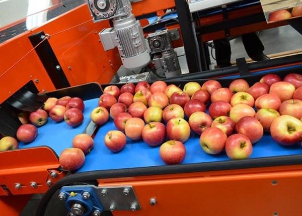 Ce prețuri se oferă anul acesta pe piață pentru merele care merg la fabricile de procesare