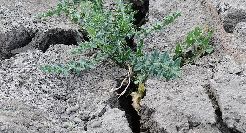 Specialist: În Moldova, secetele se vor repeta o dată la doi ani