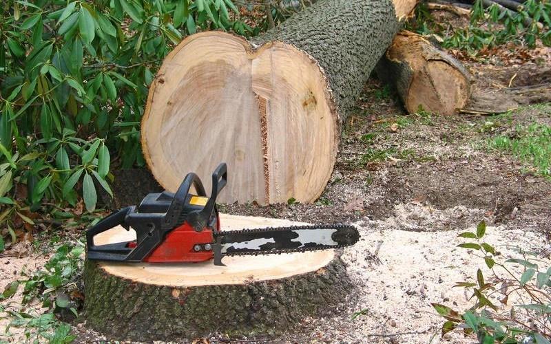 Ministerul Mediului propune sistarea temporară a exportului şi reexportului de mase lemnoase