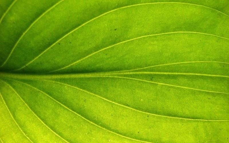 Microoganismele din biogaz pot dubla recolta de legume și cereale