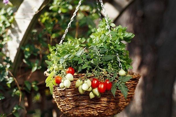 5 metode inedite de a cultiva roșiile în grădină