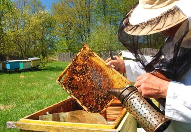 Noi cerințe faţă de calitatea producţiei secundare de albinărit