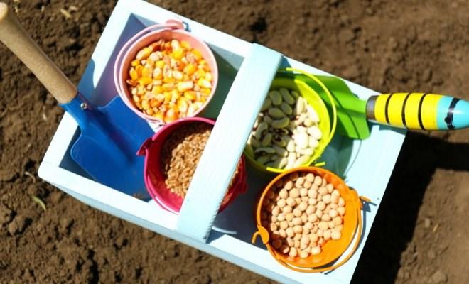 Calendarul lucrărilor agricole: Ce plantăm în grădină pe parcursul lunii martie