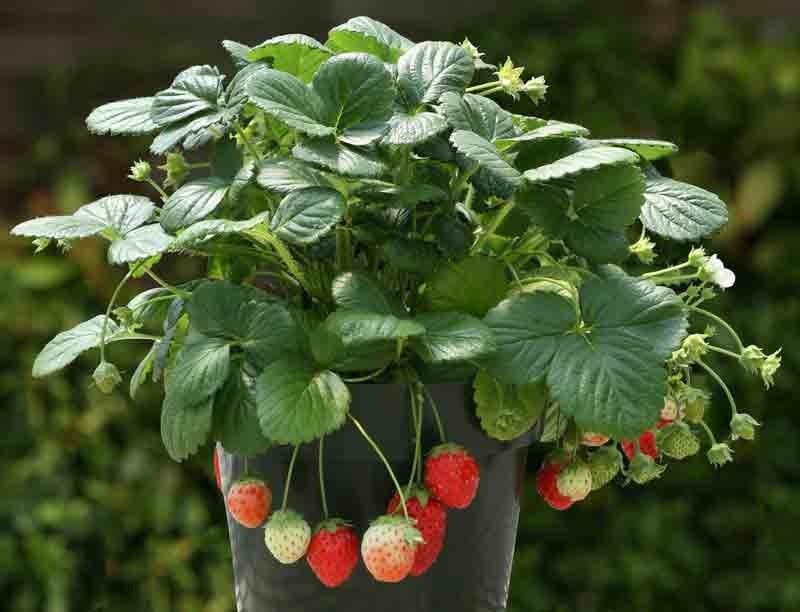 FOTO: images.vegetalis.com