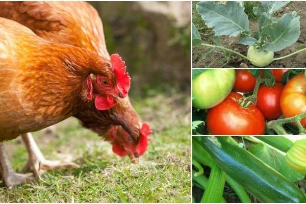 Gunoiul de la păsări poate deveni cel mai bun îngrășământ pentru legume