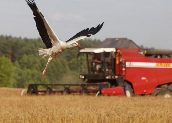 Roada grâului de toamnă ar putea întrece media pentru ultimii zece ani