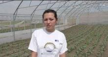 VIDEO. Serele cu legume ecologice, afacerea în care își pune toate speranțele o tânără familie din Anenii Noi