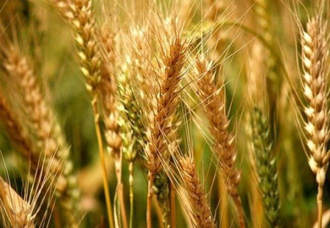 AGRONOM CONSULTANT – specialist in nutritie vegetala