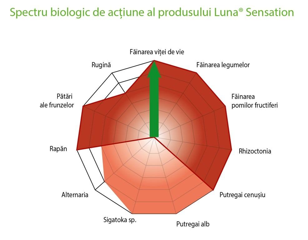 luna-sensation3