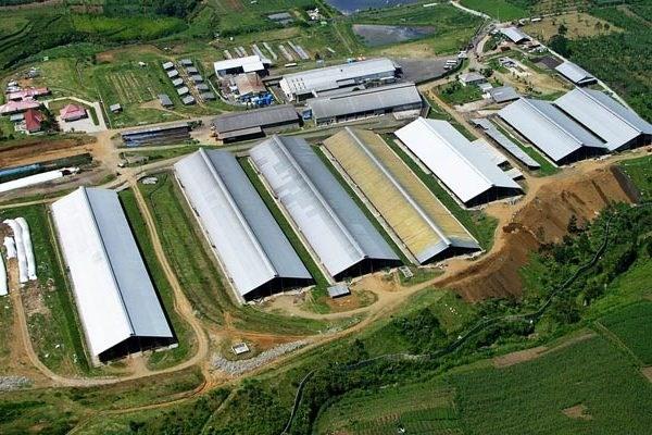 VIDEO. Cum arată cea mai mare fermă de vaci din China, cu un șeptel de peste 40 de mii de bovine