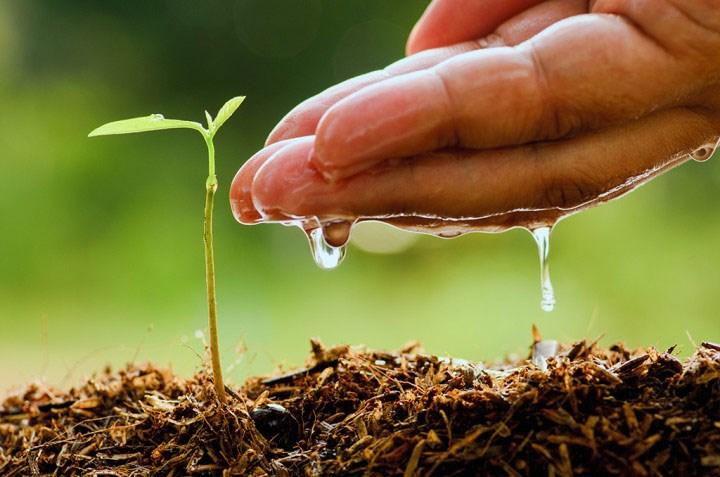 Top 5 tendințe și provocări pentru agricultura mondială