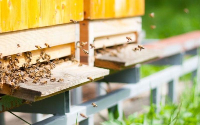 Probleme pentru apicultori: Albinele mor, mierea e puțină, iar prețurile sunt mici din cauza intermediarilor