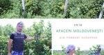 FOTO. Afaceri cu zmeură: Cum a reușit Victor Furtună din Zaim să-și scape de secetă plantația de pomușoare