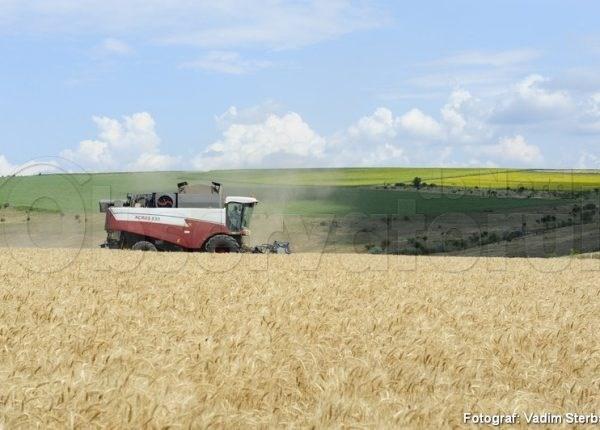 Cum decurge campania de recoltare a cerealelor la Soroca
