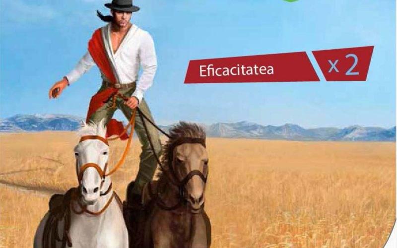BAYER: Gaucho Plus – insecticid pentru tratarea semințelor de cereale