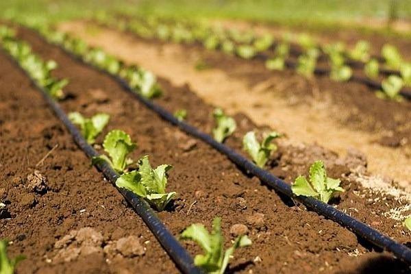 Pompe performante de ridicarea presiunii indispensabile în agricultură