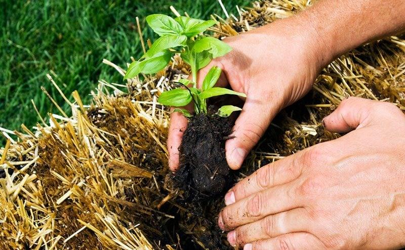 FOTO. Tehnica cultivării legumelor în baloturi de paie. Simplu și eficient