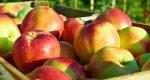 Încă 43 de companii moldovenești pot exporta fructe în Rusia. Iată lista acestora