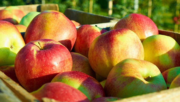 6 greșeli de evitat la păstrarea merelor