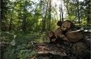 FAO solicită o mai bună coordonare între silvicultură și agricultură pentru îmbunătățirea securității alimentare