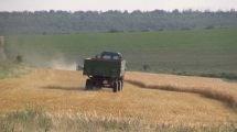 VIDEO. La sudul țării s-a rodit grâu și orz frumos. Iată cum decurge secerișul la Avdarma