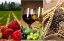 Alte trei companii vor primi granturi pentru a-și spori exporturile de căpșuni, vin și cereale bio în UE