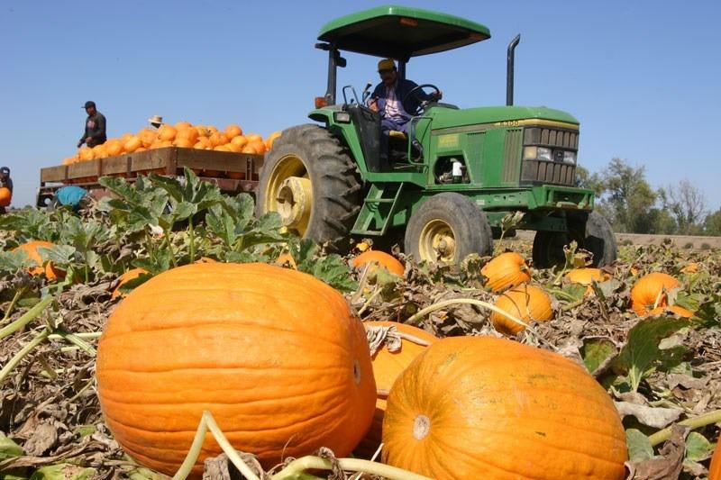 FOTO: mudonthefarm.homestead.com