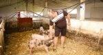 FOTO. Cu ajutorul UE în doar jumătate de an a pus pe picioare o fermă de porci profitabilă